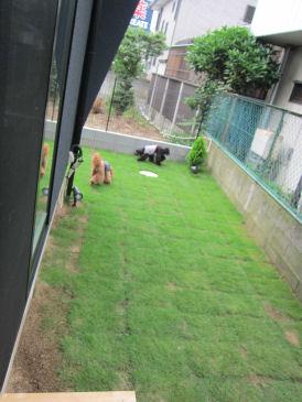 20107.11お庭