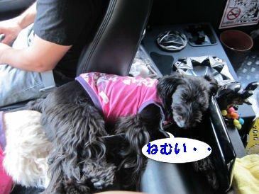 2010.7.17眠い・・・