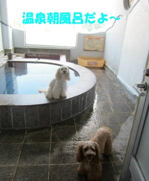 2010.7.17早朝温泉