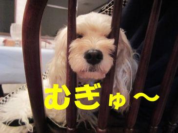 2010.7.18あずき~