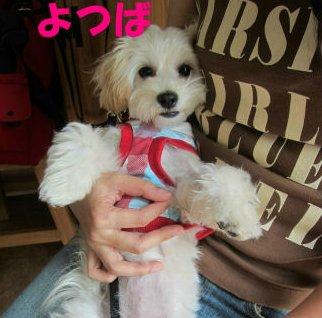 2010.7.21よっちゃん