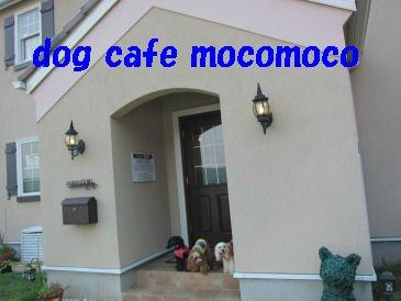 2010.7.21dog cafe mocomoco