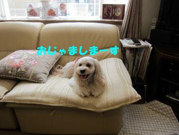 2010.8.5 おじゃましまーす
