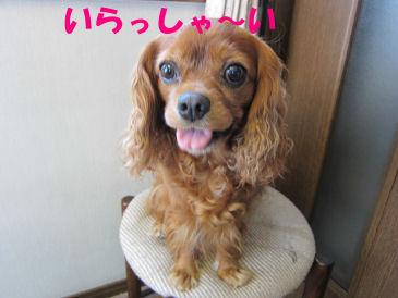 2010.8.5 いらっしゃーい