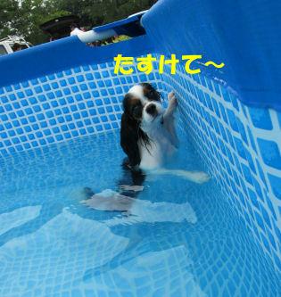 2010.8.13あんじー