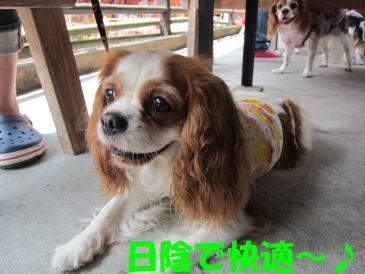 2010.8.22 ひかげ~