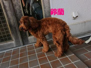 2010.9.5すずらんちゃん