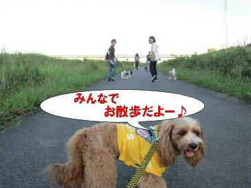2010.10.10おさんぽだよー