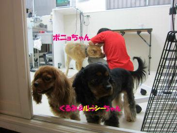 2010.10.13看板犬ちゃん