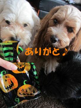 2010.10.3お土産ありがとう