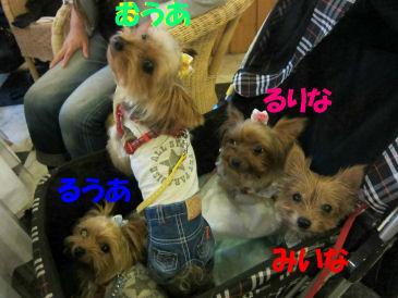 2010.10.18みいなふぁみりー