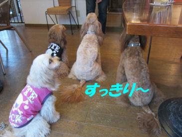 2010.10.19すっきり~