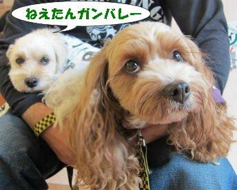 2010.11.1がんばれー