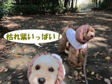 2010.11.5枯れ葉