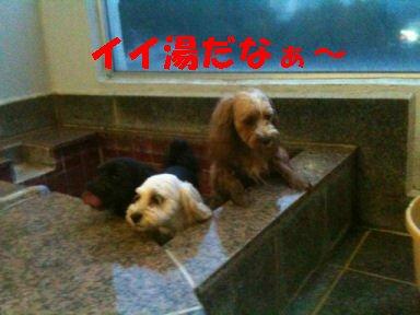 2010.7.17いいゆだね~