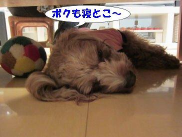 2010.11.6ねちゃお