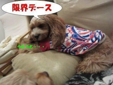 2010.11.6限界よろしく~