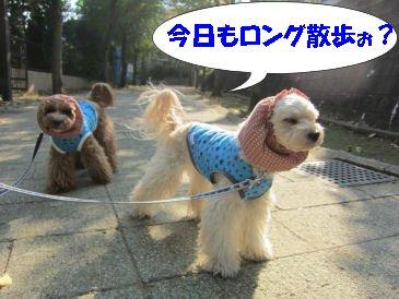 2010.11.8お散歩に行くよー