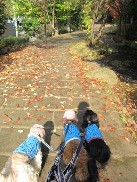 2010.11.8ロング散歩~