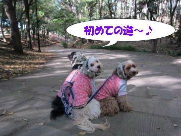 2010.11.9初めての道~