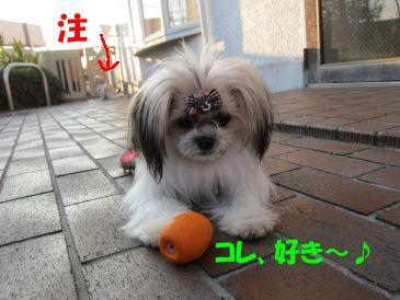 2010.11.12たまごちゃん