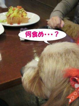 2010.11.12何食め・??