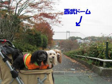 2010.11.14西武ドーム