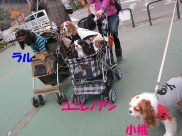 2010.11.14いつものメンバー