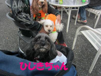 2010.11.14ひじき~