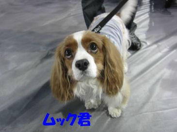 2010.11.14ムックさん