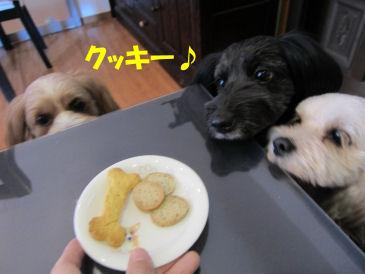2010.11.16クッキー