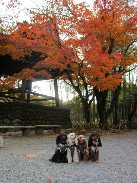 2010.11.16修善寺~