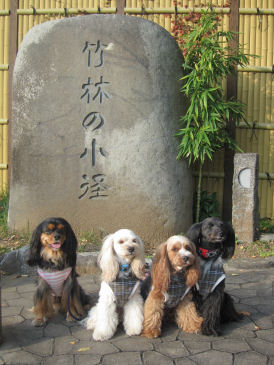 2010.11.16竹林♪
