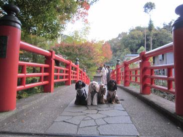 2010.11.16橋~