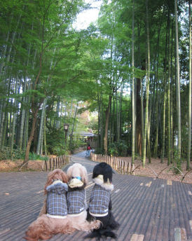 2010.11.16竹すてきー