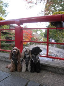 2010.11.16橋2