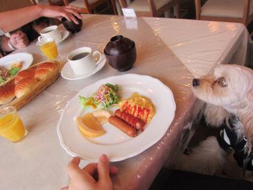 2010.11.17朝食