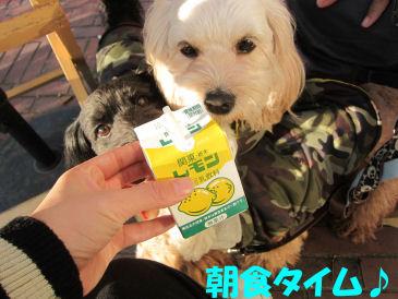 2010.11.21朝食~