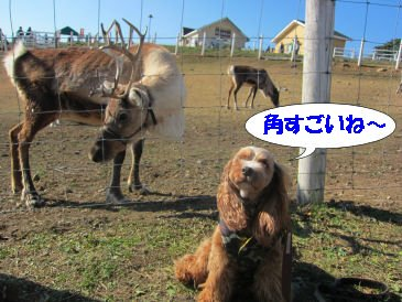 2010.11.21しかさん
