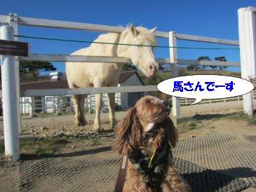 2010.11.21馬さーん