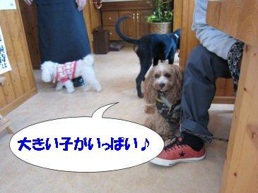 2010.11.21大きい子いっぱーい