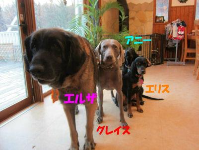 2010.11.21看板犬ちゃん