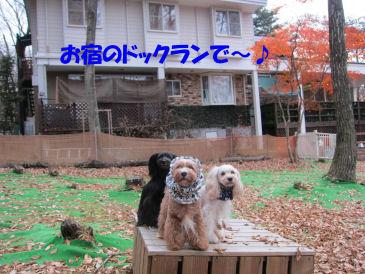 2010.11.22ヤドラン