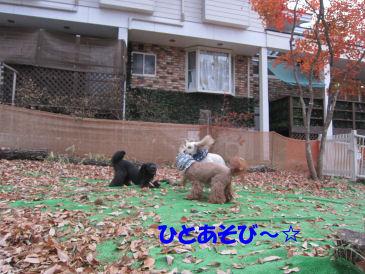 2010.11.22あそぶー