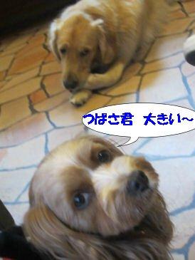 2010.11.22つー君