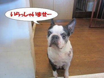 2010.11.24いらっしゃい~