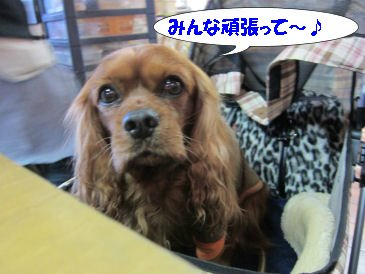 2010.11.28がんばれー