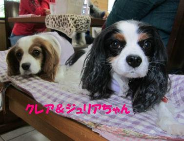 2010.12.2くれじゅりちゃん