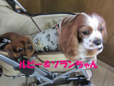 2010.12.2ソランルビーちゃん