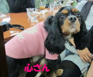 2010.12.2心さん